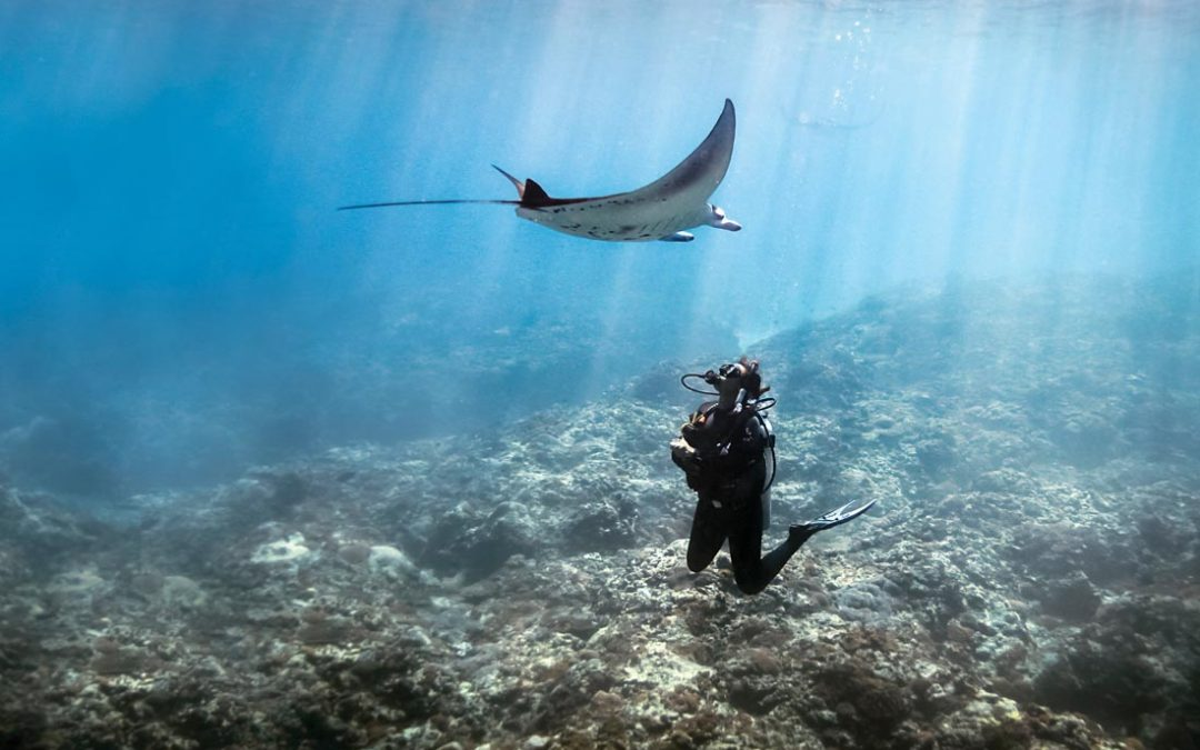 Snorkelling with manta rays in the Maldives