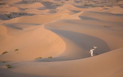 Get up-close and personal with the desert wildlife thanks to these three Abu Dhabi experiences