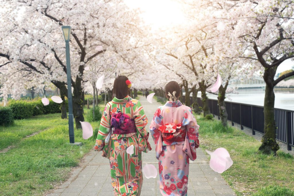 women strolling between cherry blossom trees wearing traditional Japanese kimonos in Osaka