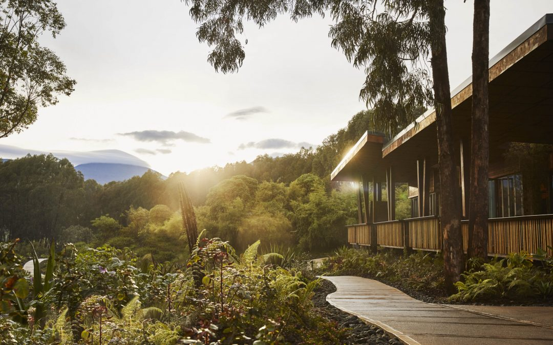 A guide to visiting Rwanda as the East African country re-opens for tourism