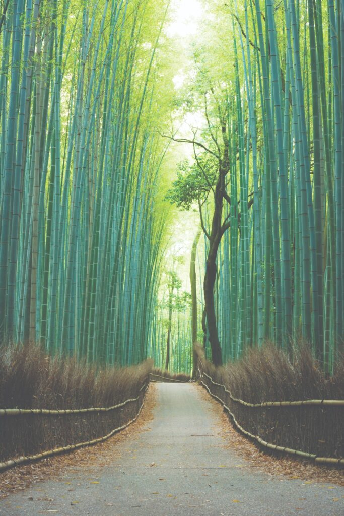 Bambo forest in Kyoto