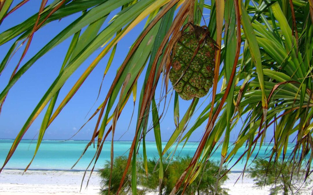 Travelling to Zanzibar? The essentials you need to know before arriving