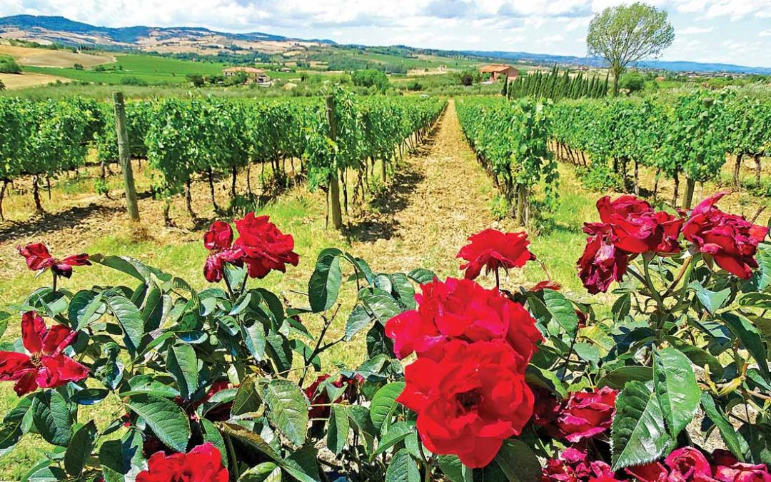 The trip to Tuscany that lives up to the imagination –and how to retrace it